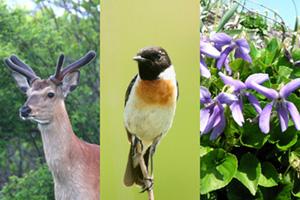 緑地に息づく野生動植物。左からエゾシカ、ノビタキ、セナミスミレ。