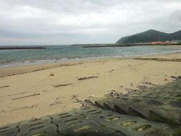漂着物が打ち上げられている浜辺