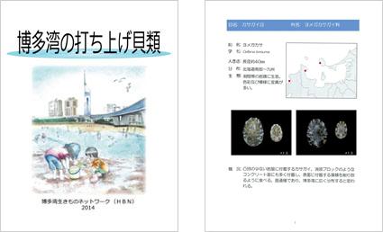「博多湾の打ち上げ貝類」の表紙と見本