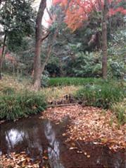 崖線斜面の広葉樹林と湧水を一体で保全している緑地。ボランティア団体「成城みつ池を育てる会」が中心となって維持管理・保全の取組みが続けられています。東京23区内ではほとんど見ることのできないゲンジボタルが生息するなど、世田谷区内でも特に貴重な環境です。