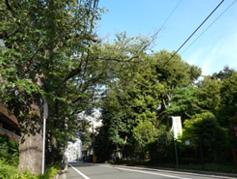 弊社のある桜新町の街並み立派な樹木が多くみられます。