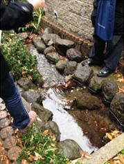 こちらは「成城みつ池緑地」の湧水を流し、沿道も整備した水路。住宅のすぐ脇を清らかな水が常に流れています。