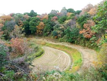 堺市の里山林と棚田