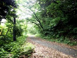 林内は整備されており、歩きやすいです。
