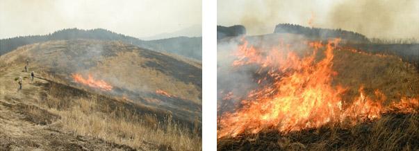 【阿蘇の草原(早春)】阿蘇の草原は野焼きなどの人間活動によって維持されています。
