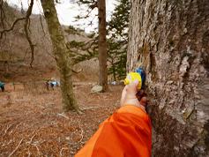 バーテックスで樹高を計測