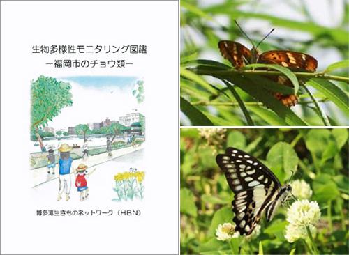 左:「生物多様性モニタリング図鑑 -福岡市のチョウ類-」表紙 右上:コムラサキ 右下:ミカドアゲハ(本図鑑より抜粋)