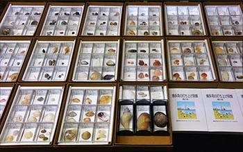 現在展示中の博多湾の打ち上げ貝類の標本