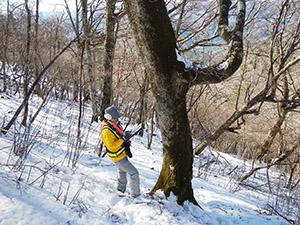 中央山地での大木調査