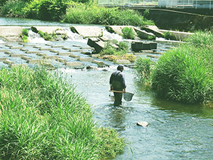 河川の魚類調査