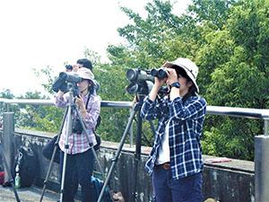 社員の勉強会。金華山にて。タカの渡り観察会。