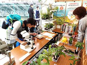 なごや生物多様性センターまつり(名古屋市)出展の様子。